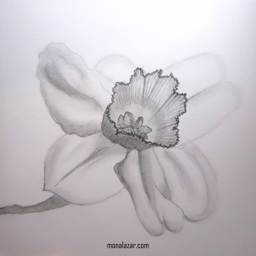 drawing graphics pencil graphite 3D beautiful flower iris